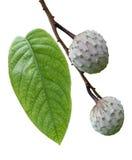 Fruta de la chirimoya Fotos de archivo