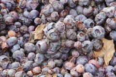 Fruta de la descomposición Imagen de archivo libre de regalías