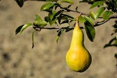 Fruta de la empanada fotos de archivo