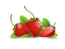 Fruta de la fresa stock de ilustración