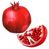 Fruta de la granada aislada Imagen de archivo libre de regalías