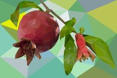 Fruta de la granada en polígonos Fotografía de archivo