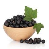 Fruta de la grosella negra fotografía de archivo libre de regalías