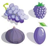 Fruta de la lila Fotografía de archivo libre de regalías