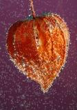 Fruta de la linterna en agua imagenes de archivo