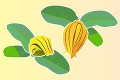 Fruta de la mano del ` s de Buda stock de ilustración