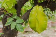 Fruta de la manzana de estrella Fotografía de archivo libre de regalías