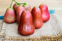 Fruta de la manzana de Rose Foto de archivo libre de regalías