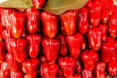 Fruta de la manzana de Rose Imagenes de archivo