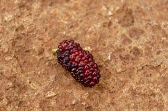 Fruta de la mora en superficie concreta fotografía de archivo
