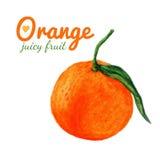 Fruta de la naranja de la acuarela citrus Pinturas recientes de la acuarela del alimento biológico Fruta exótica fresca stock de ilustración