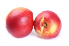 Fruta de la nectarina aislada fotografía de archivo libre de regalías