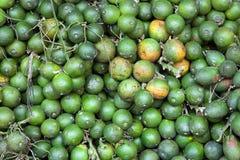 Fruta de la palma de betel Imágenes de archivo libres de regalías