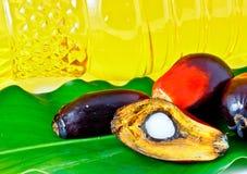 Fruta de la palma de petróleo y petróleo de la oleína de la palma Fotografía de archivo