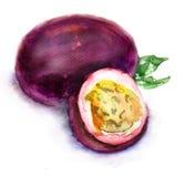 Fruta de la pasión ilustración del vector