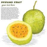 Fruta de la pasión stock de ilustración