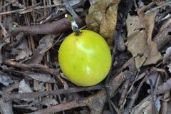 Fruta de la pasión Fotos de archivo libres de regalías