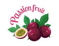 Fruta de la pasión Ejemplo del vector hecho en un estilo realista Imagen de archivo