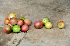 Fruta de la pasión en la vid Foto de archivo libre de regalías