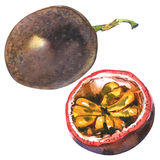 Fruta de la pasión, passionfruit, maraquia, entero y medio, rebanada, ejemplo de la acuarela en blanco fotos de archivo libres de regalías