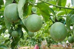 Fruta de la pasión, vitamina C, comida sana, passionfruit Foto de archivo
