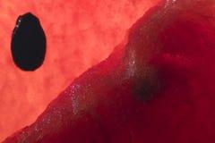 Fruta de la sandía Foto de archivo libre de regalías