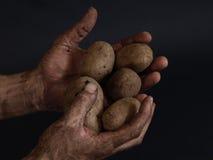 Fruta de la tierra Imagen de archivo libre de regalías