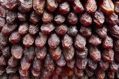 Fruta de las fechas Fotografía de archivo libre de regalías