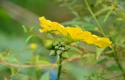 Fruta de las flores que florece en el jardín Imagenes de archivo