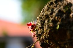 Fruta de las flores que florece en el jardín Imagen de archivo libre de regalías