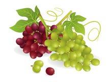 Fruta de las uvas Fotos de archivo libres de regalías
