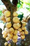 Fruta de Longkong Imagenes de archivo