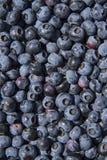 Fruta de los arándanos Foto de archivo libre de regalías