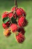 Fruta de los Rambutans fotografía de archivo libre de regalías