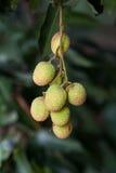 Fruta de Lychee Fotografía de archivo