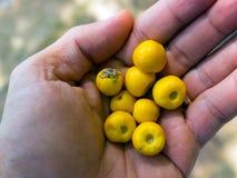Fruta de Murici fotos de archivo libres de regalías