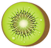 Fruta de quivi - vetor Imagens de Stock Royalty Free