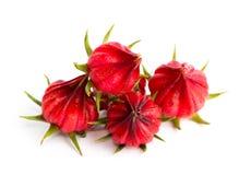 Fruta de Roselle aislada Fotos de archivo