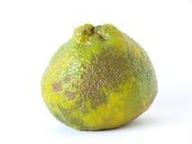 Fruta de Ugli Fotografía de archivo libre de regalías