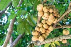 Fruta de Wollongong imágenes de archivo libres de regalías