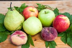 Fruta del árbol frutal fotos de archivo libres de regalías