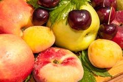 Fruta del árbol frutal, fotografía de archivo