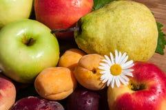 Fruta del árbol frutal, imagenes de archivo
