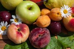 Fruta del árbol frutal, foto de archivo libre de regalías
