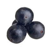 Fruta del acai del Amazonas imagen de archivo libre de regalías
