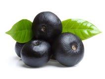 Fruta del acai del Amazonas con la hoja Imagen de archivo libre de regalías