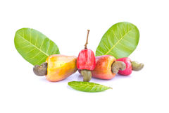 Fruta del anacardo Fotos de archivo libres de regalías