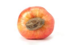 Fruta del anacardo de Caju del brasileño Imagen de archivo libre de regalías