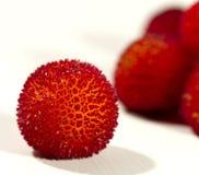 Fruta del Arbutus Fotografía de archivo libre de regalías