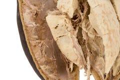 Fruta del baobab fotos de archivo libres de regalías